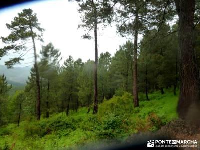 Castañar de El Tiemblo; viajes de verano; viajes septiembre;rutas de senderismo en la sierra de mad